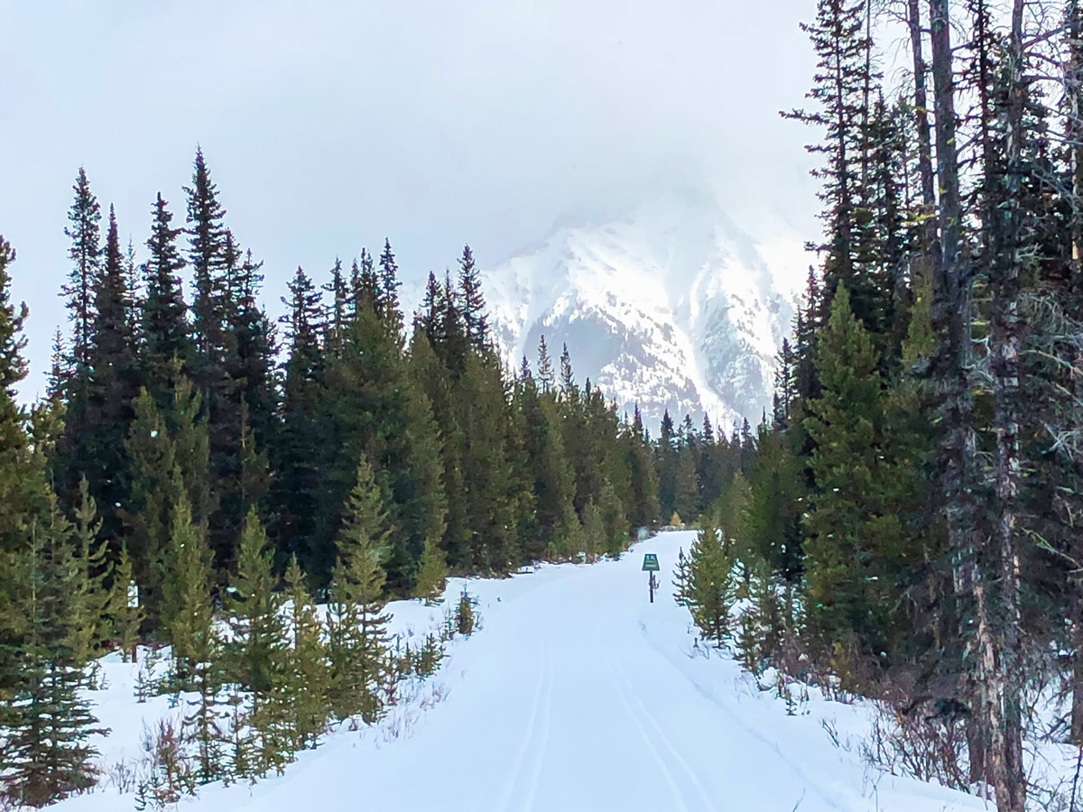 Great views on Mt Shark XC ski trail near Kananaskis and Canmore in the Canadian Rockies