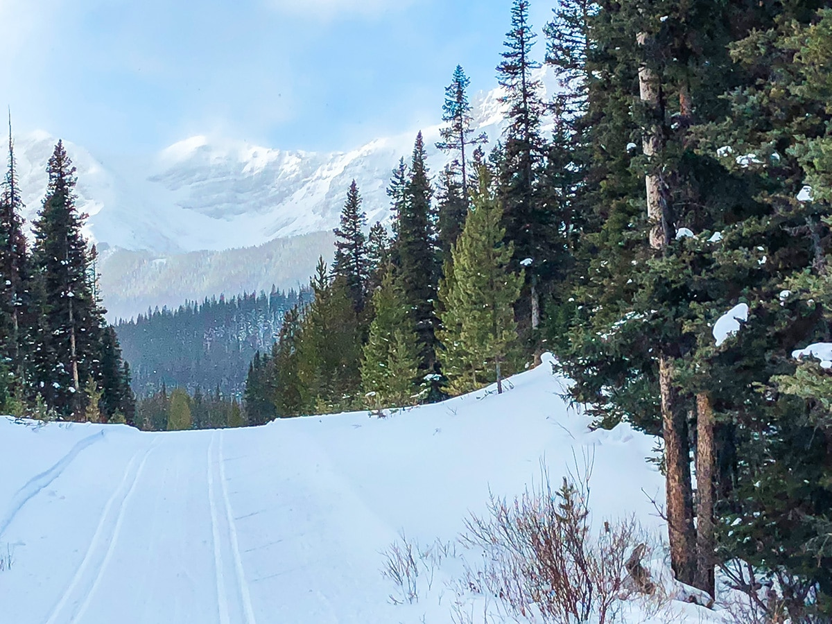 Snow on Mt Shark XC ski trail near Kananaskis and Canmore in the Canadian Rockies