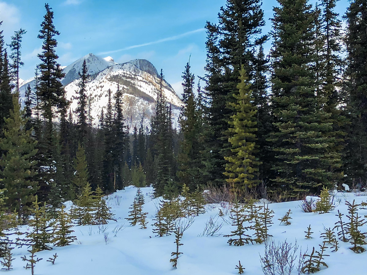 Sunny day on Mt Shark XC ski trail near Kananaskis and Canmore in the Canadian Rockies