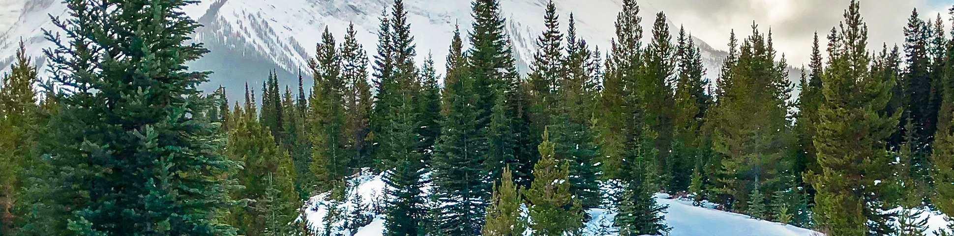 Panoramic view of Mt Shark XC ski trail near Kananaskis and Canmore in the Canadian Rockies