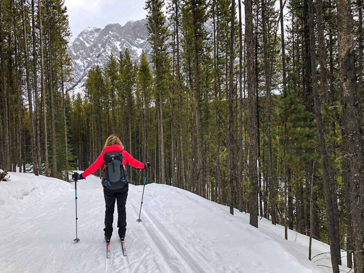 Path through the forest on Pocaterra XC ski trail near Kananaskis and Canmore
