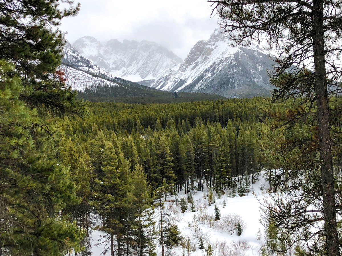 Forests and mountains on Pocaterra XC ski trail near Kananaskis and Canmore