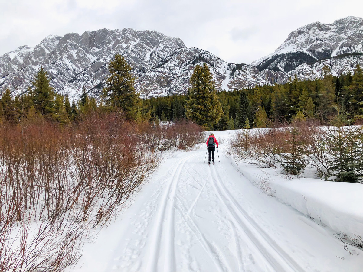 Wide path of Pocaterra XC ski trail near Kananaskis and Canmore