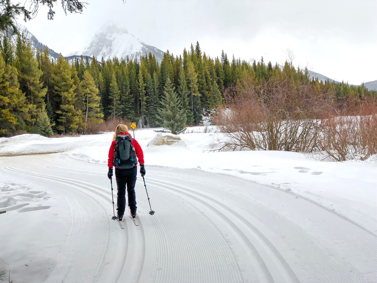 Crossing the road on Pocaterra XC ski trail near Kananaskis and Canmore