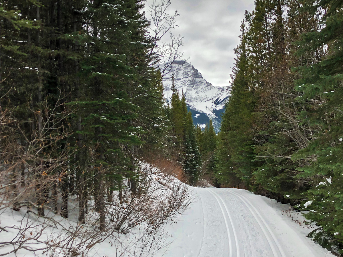 Skiing through the forest on Ribbon Creek XC ski trail near Kananaskis and Canmore