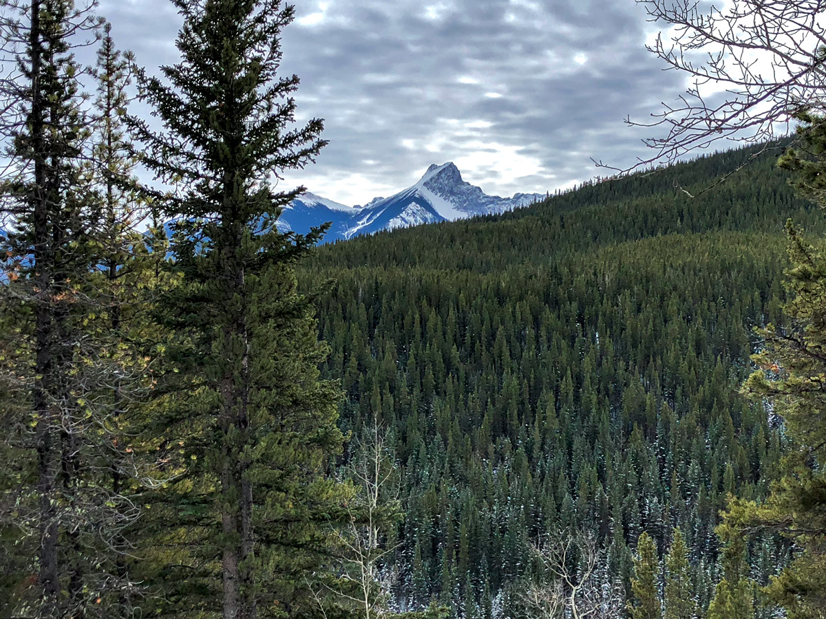 Vast forests on Ribbon Creek XC ski trail near Kananaskis and Canmore