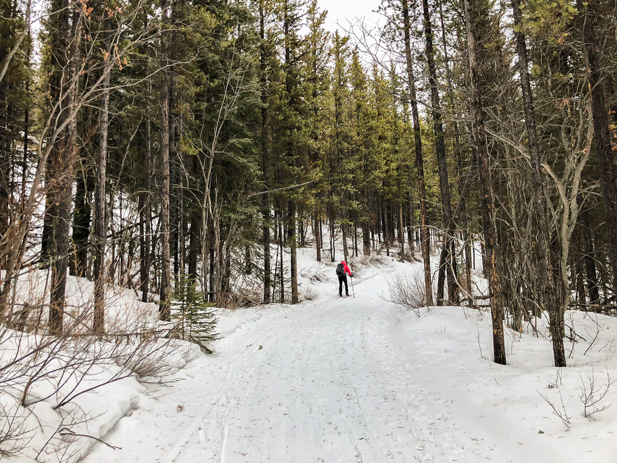 Starting Skogan Pass XC ski trail near Kananaskis in the Canadian Rockies