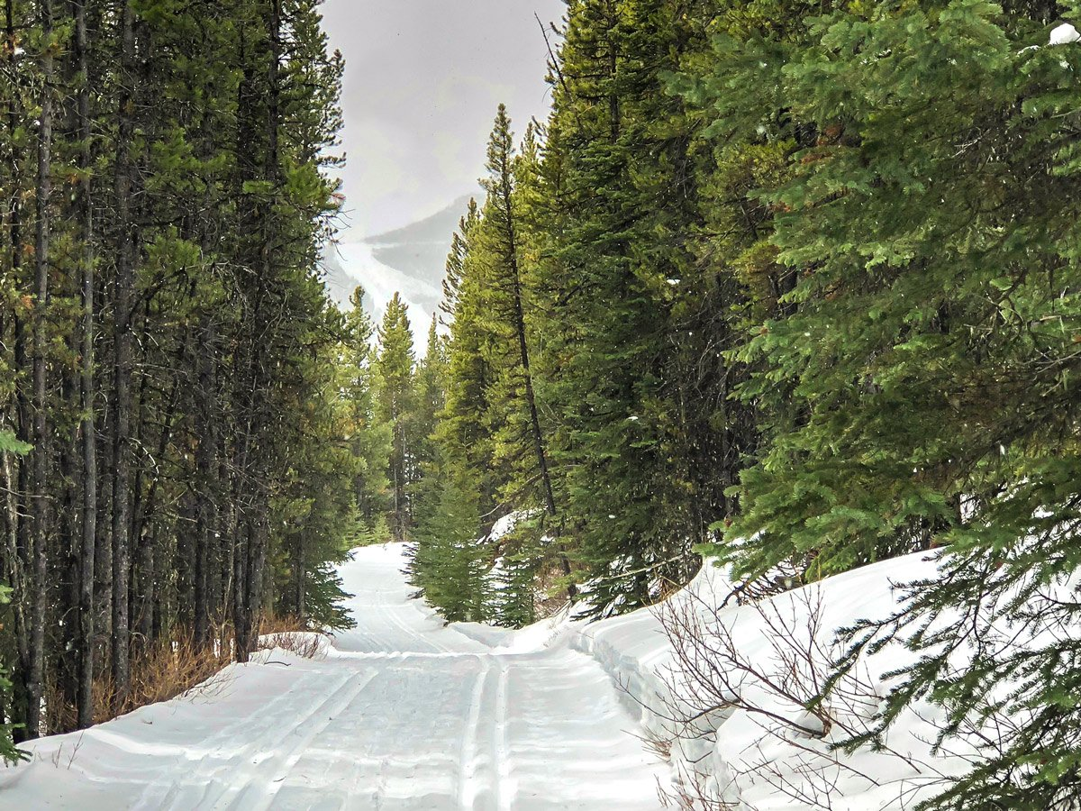 Winter views on Skogan Pass XC ski trail near Kananaskis in the Canadian Rockies