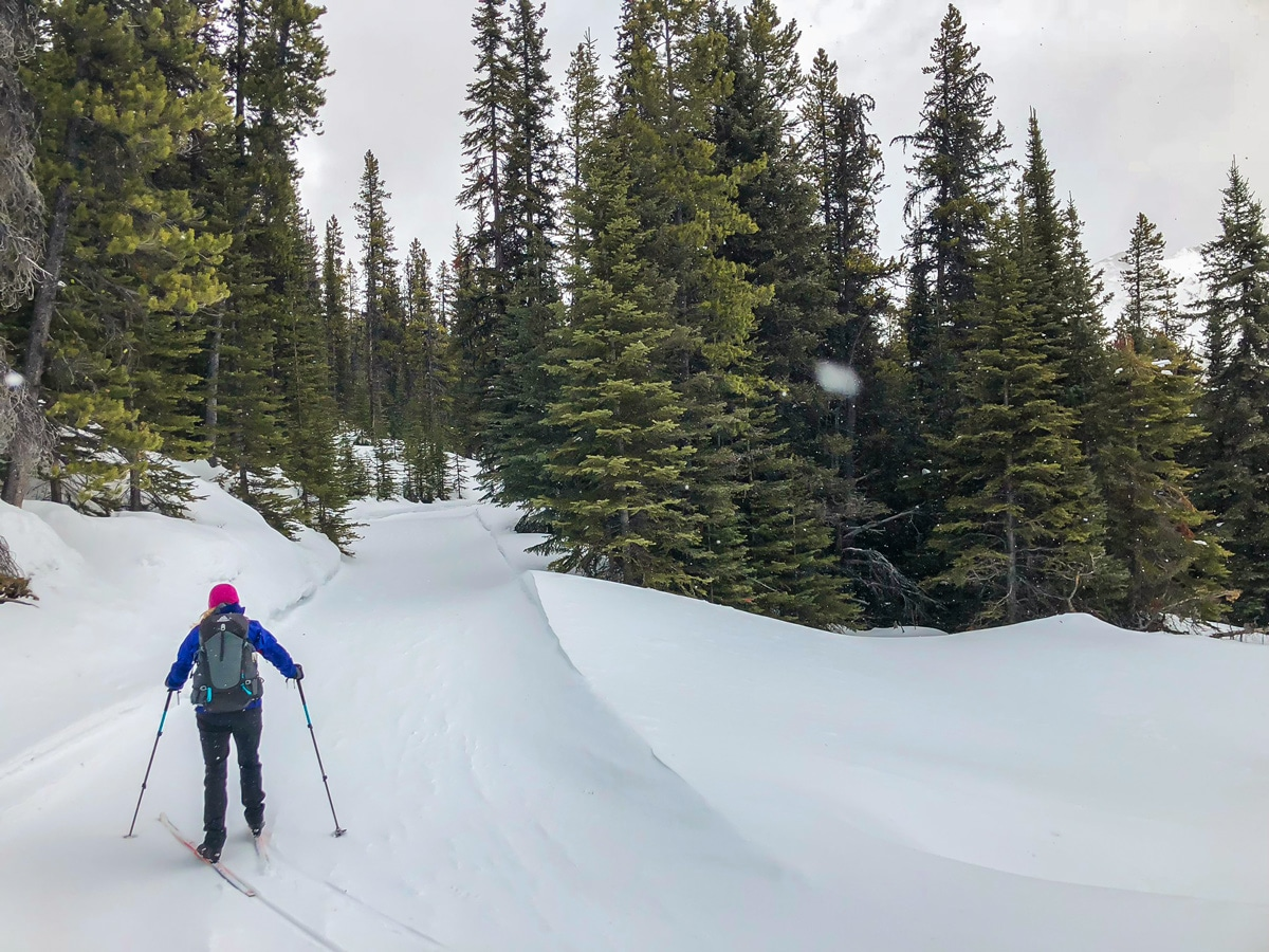 Great winter views on Skogan Pass XC ski trail near Kananaskis in the Canadian Rockies