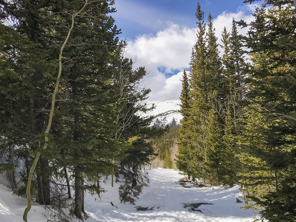 Trail through the woods on Caribou Hill snowshoe trail in Indian Peaks, Colorado