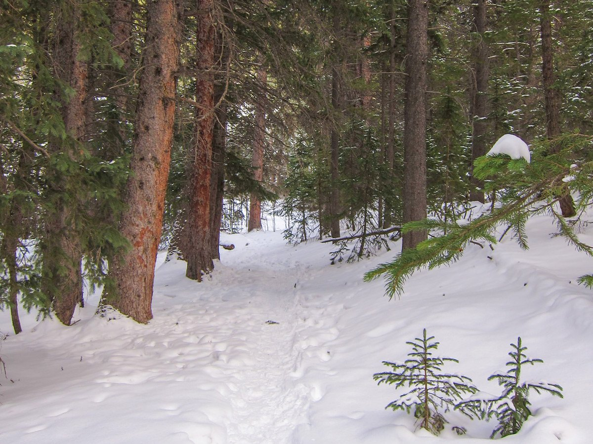 Path through the snow on Dot snowshoe trail in Indian Peaks, Colorado