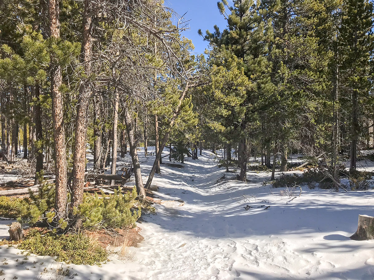 Beautiful path through the forest on Dot snowshoe trail in Indian Peaks, Colorado