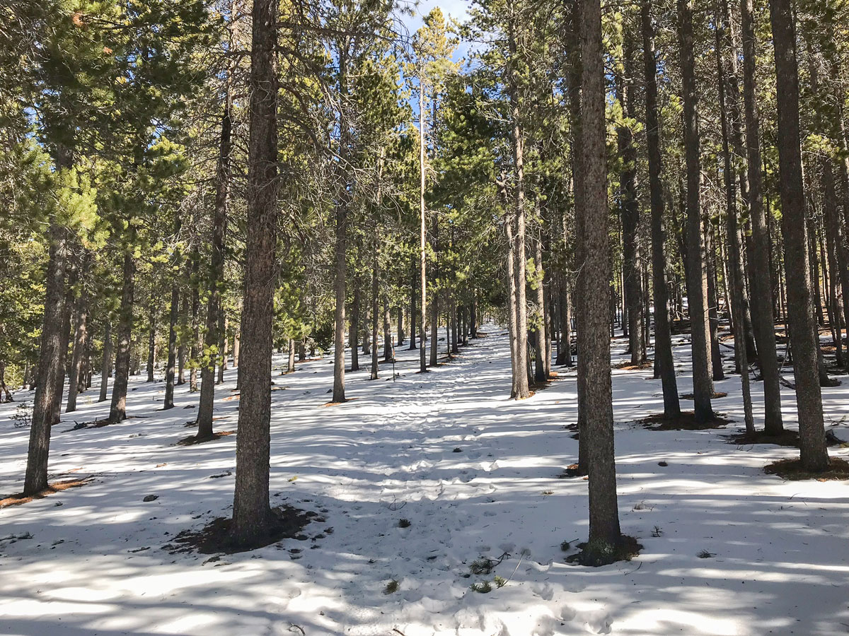 Snow on Dot snowshoe trail in Indian Peaks, Colorado