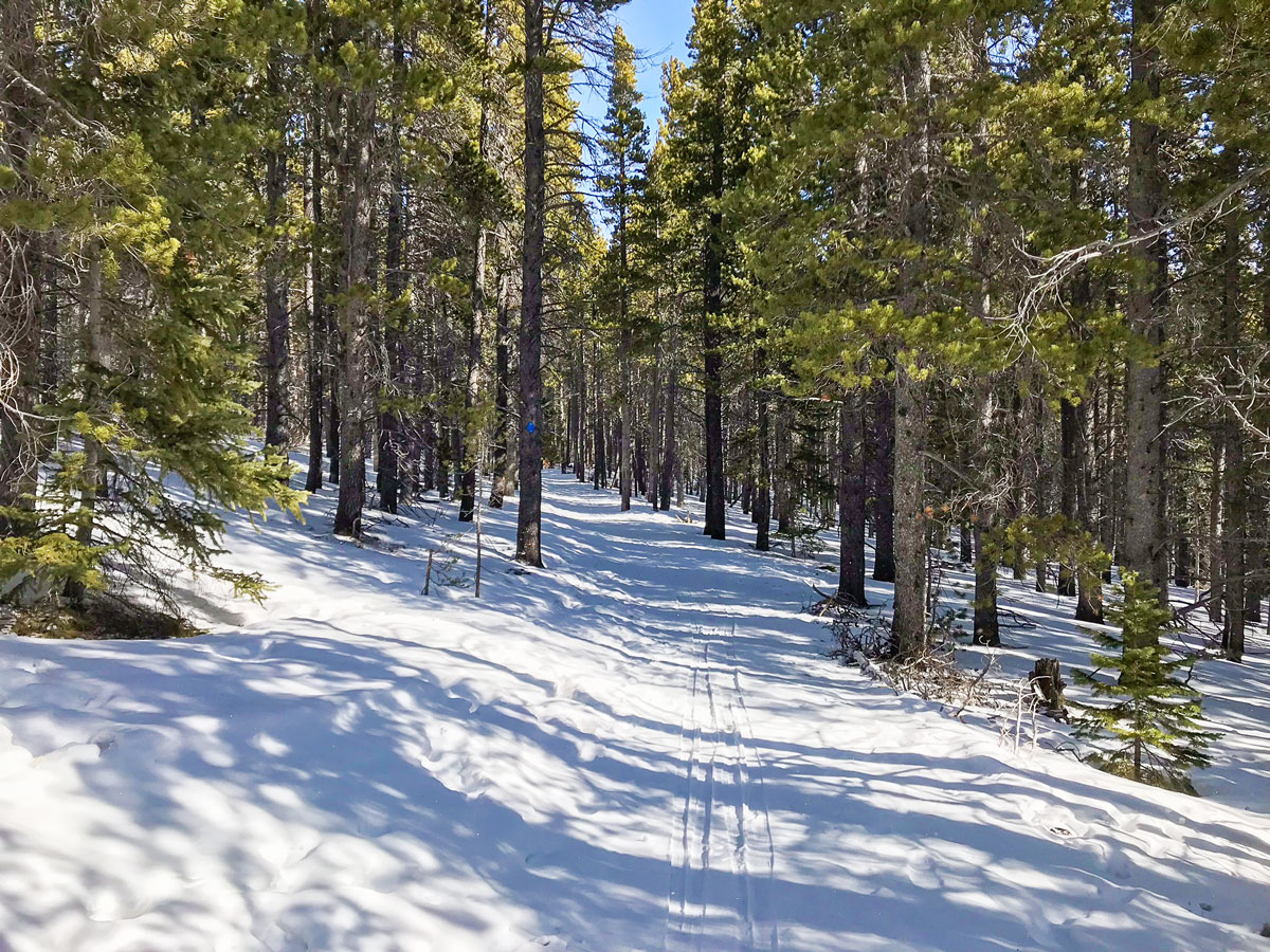 Path through woods on Sourdough snowshoe trail in Indian Peaks, Colorado