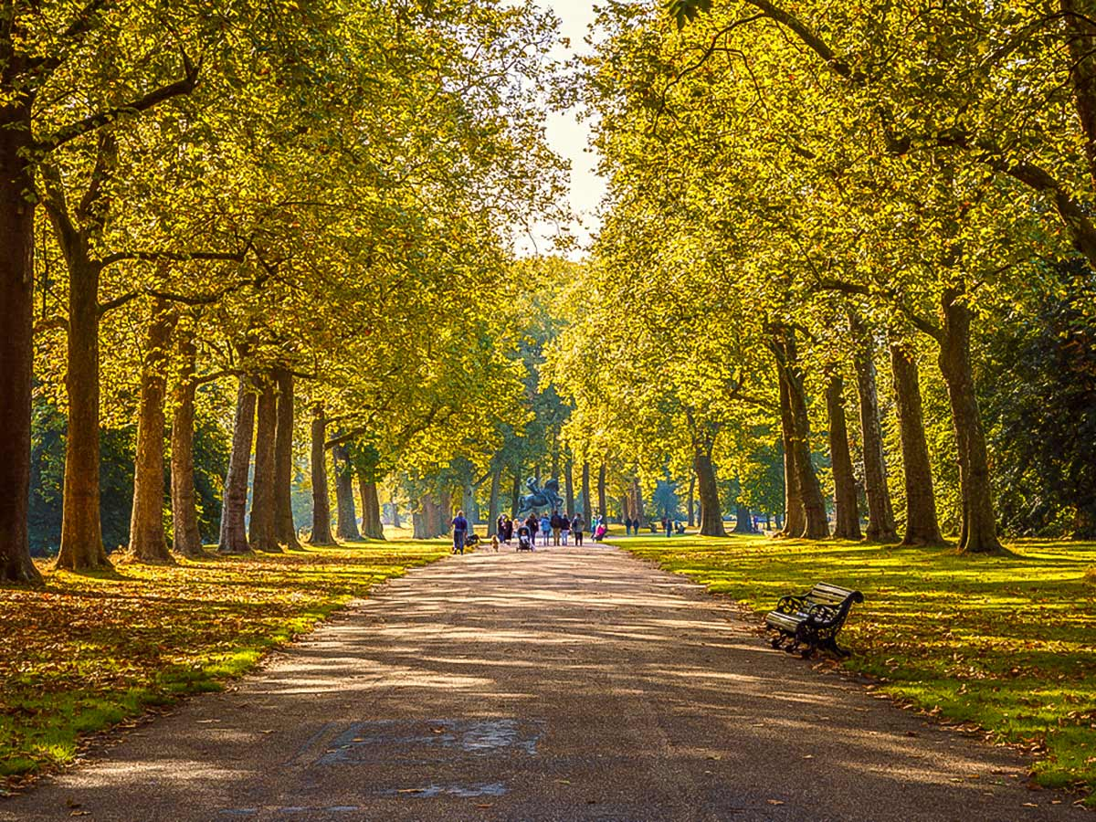 Tree lined street in Hyde Park on a city-walk in London, England, UK