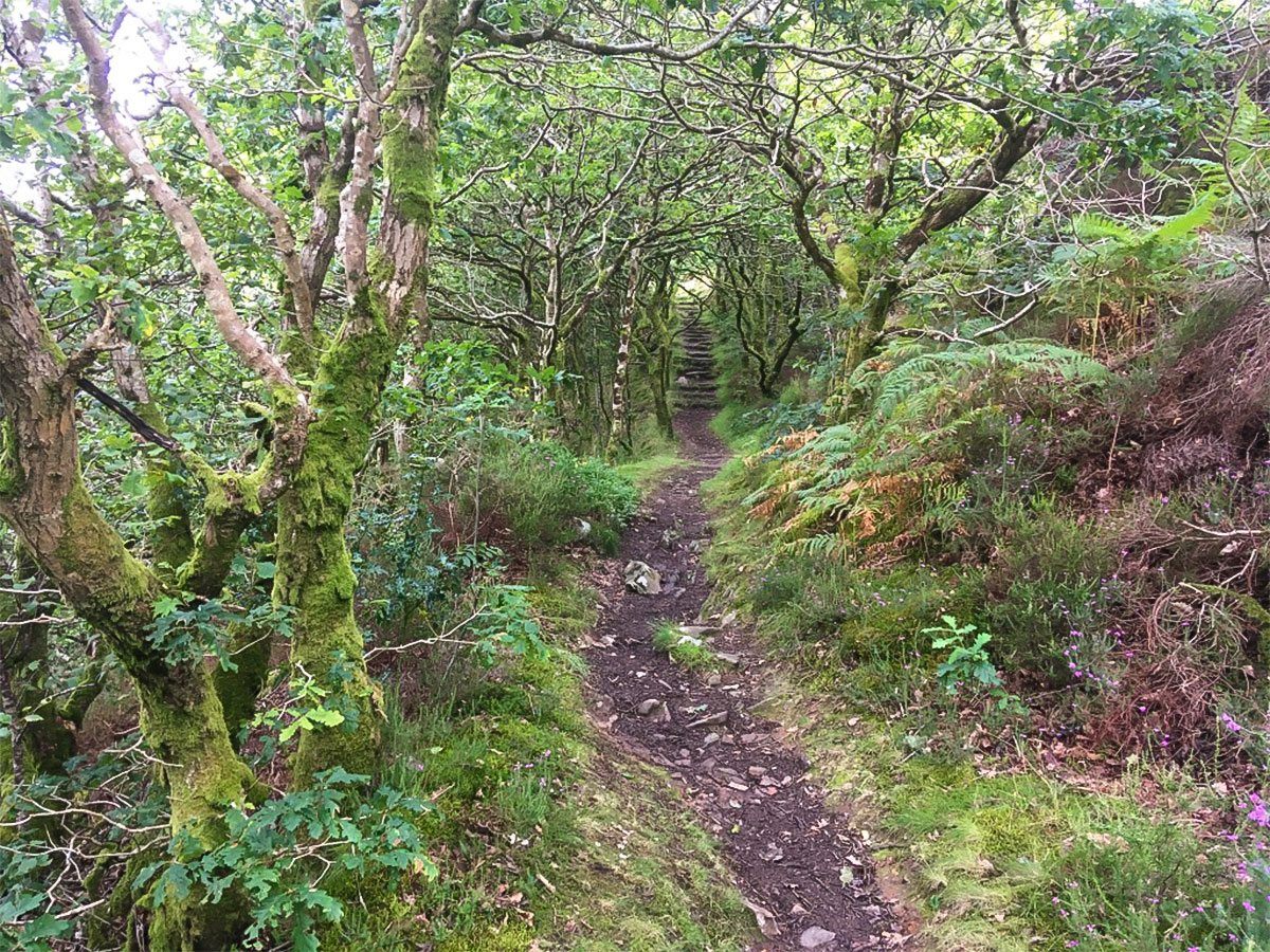 Woodland path up to Barmouth Panorama hike in Snowdonia