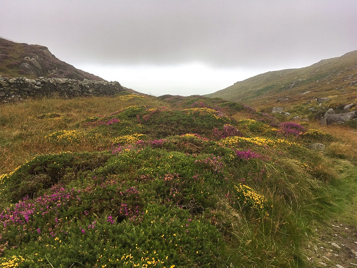 Slopes of Bwlch y Llan on Barmouth Panorama hike in Snowdonia National Park