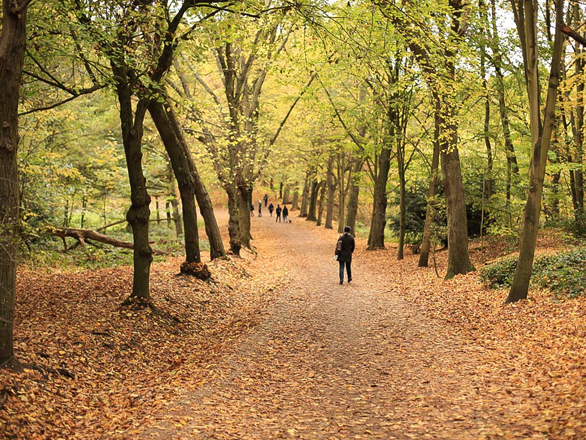 Hampstead Health on Hampstead to Highgate walking tour in London, England