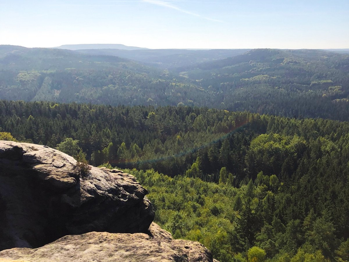 A sea of trees from the top of the Pfaffenstein