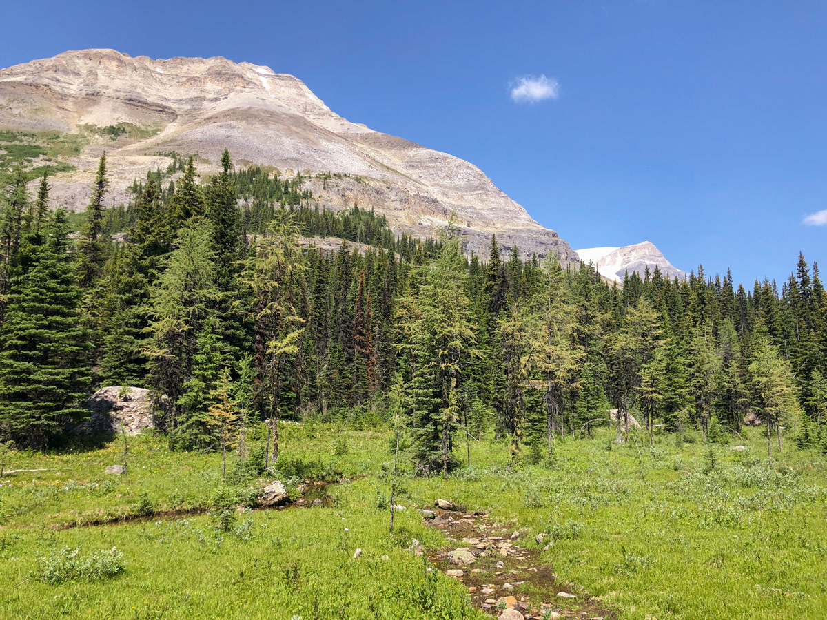 Ball Pass hike in Kootenay National Park leads through the stunning open area