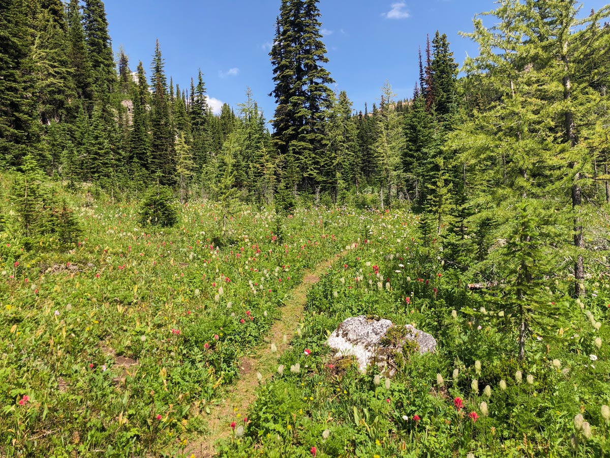 Wildflowers along the trail on Ball Pass hike in Kootenay National Park, British Columbia