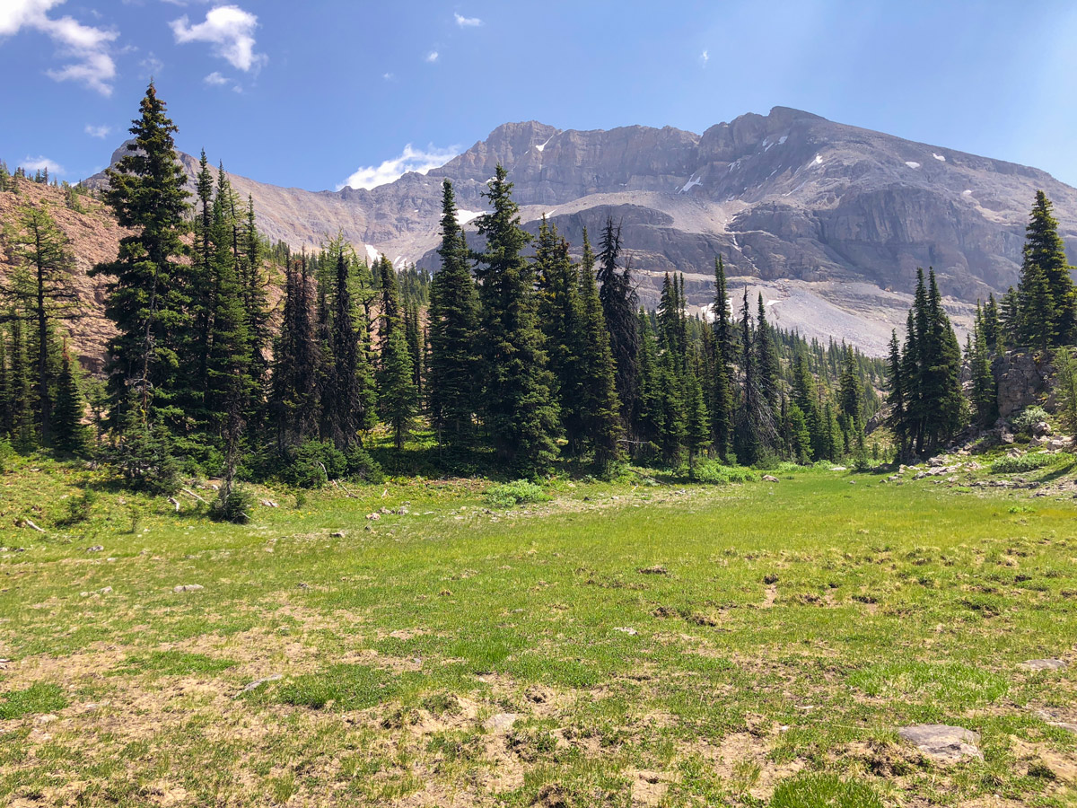 Trail of Ball Pass hike in Kootenay National Park while approaching Highway 93
