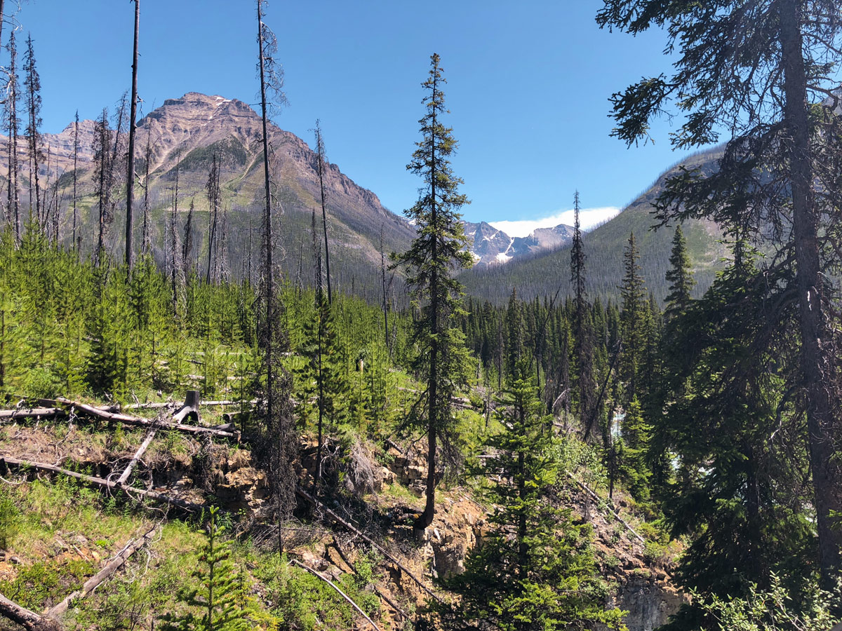 Marble Canyon hike in Kootenay National Park is surrounded by beautiful mountains