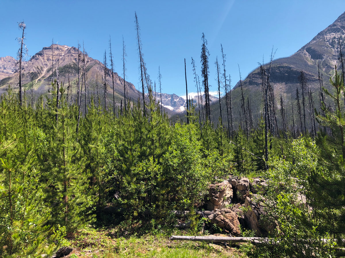 Beautiful peak view from Marble Canyon hike in Kootenay National Park
