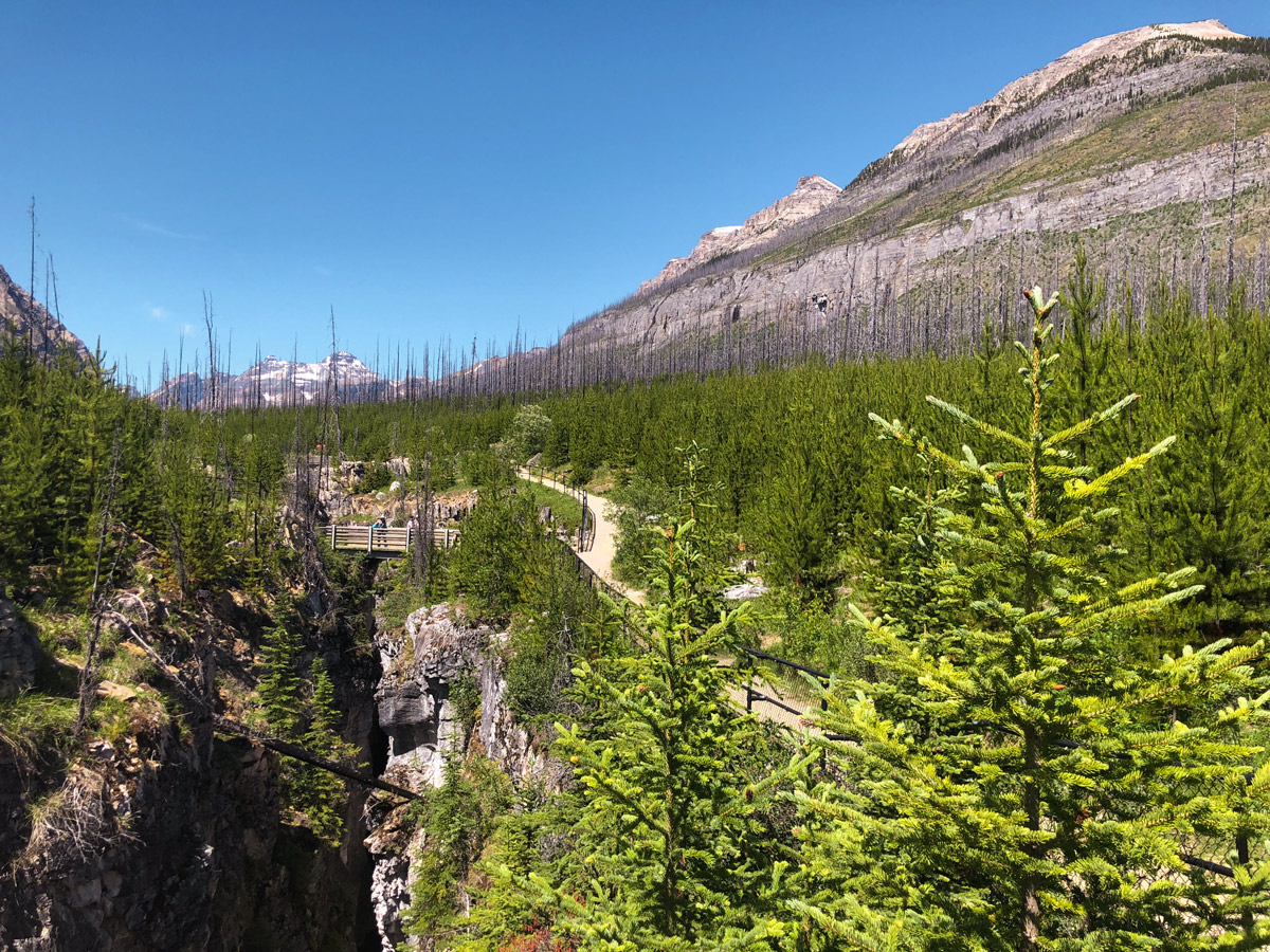 Burnt out forest on Marble Canyon hike in Kootenay National Park