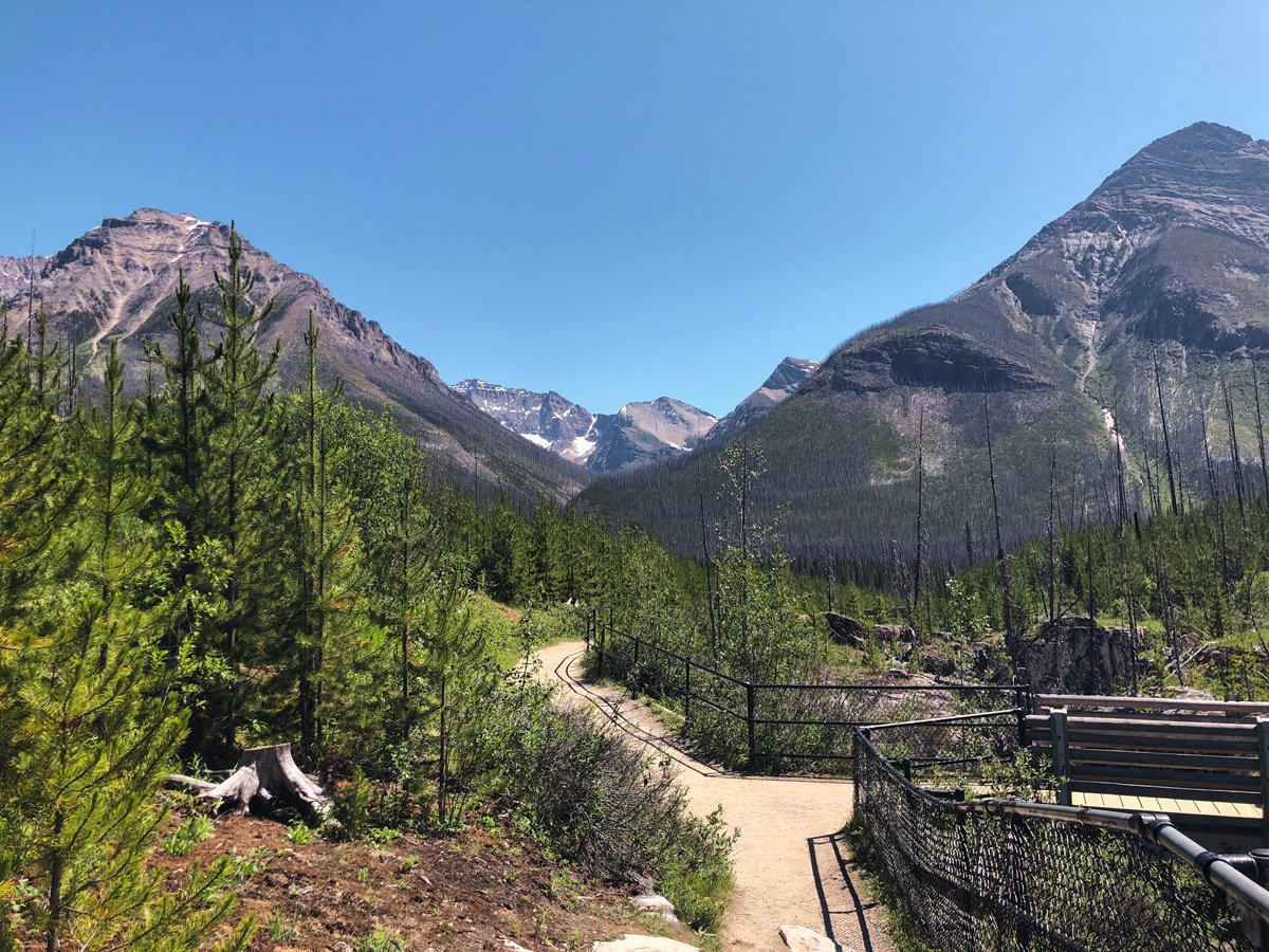 Bridge over the creek on Marble Canyon hike in Kootenay National Park