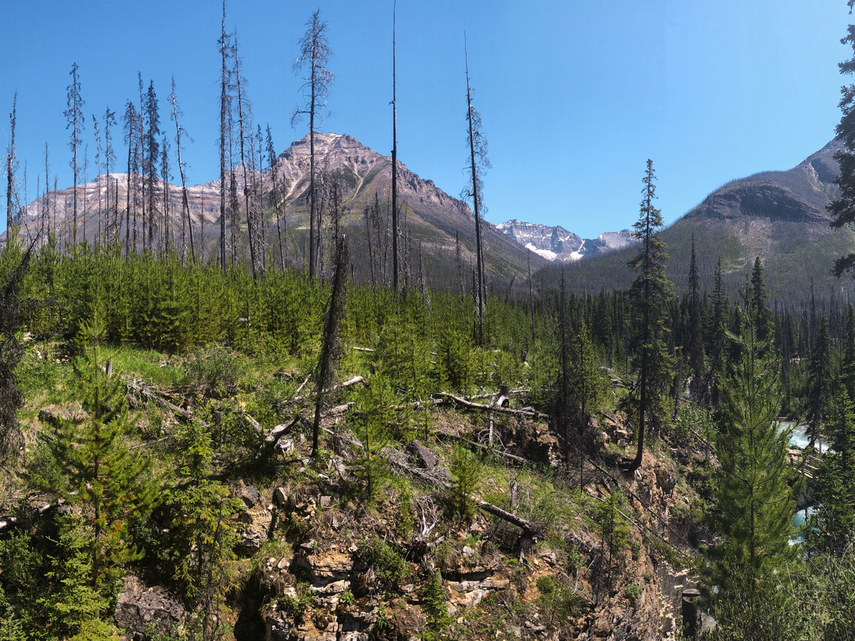 Lovely views from Marble Canyon hike in Kootenay National Park