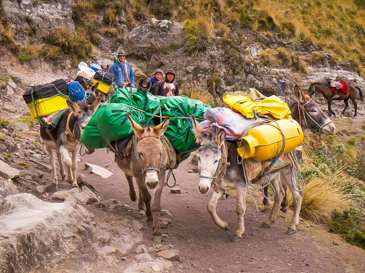 Porter duties of Ecuador Inca Trail trek falls on donkeys