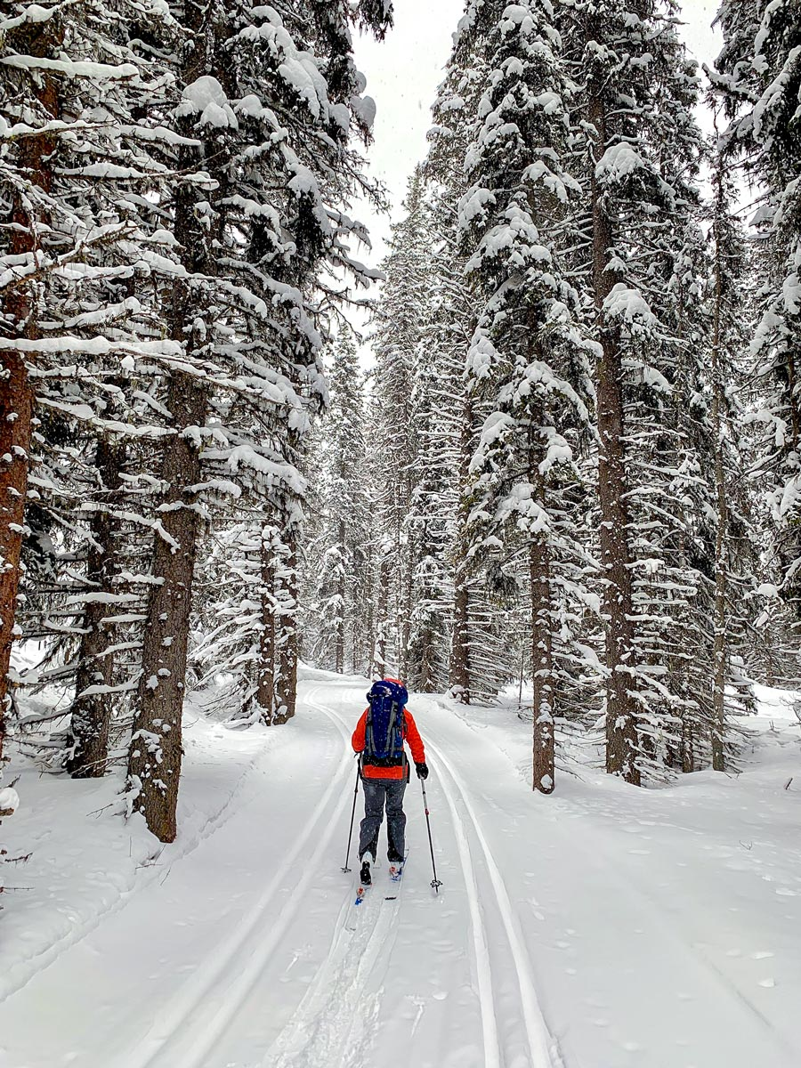 XC trail into Elk Lakes Cabin