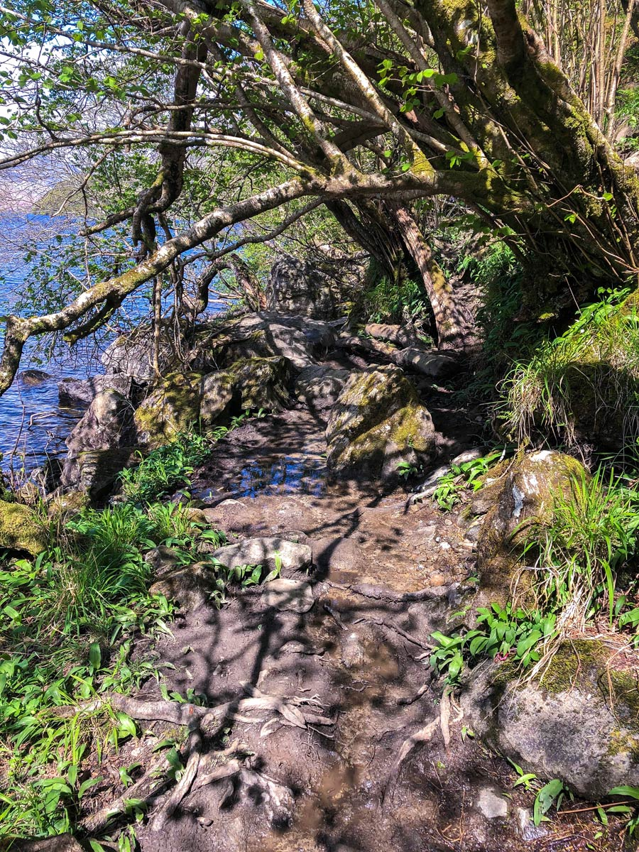 In need of some trail maintenance on the West Highland Way