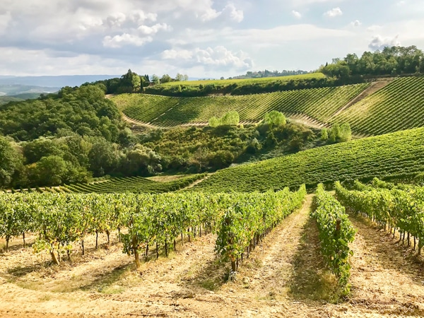 Vineyards along the trail of San Gimignano Loop Hike in Tuscany