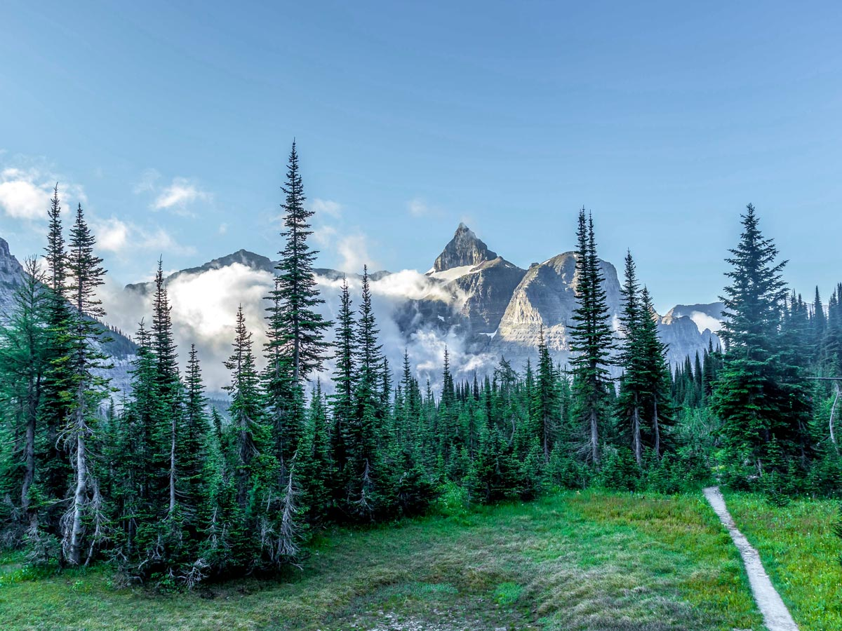 Beautiful white peaks behind the forest on Boulder Pass Backpacking Trail in Glacier National Park