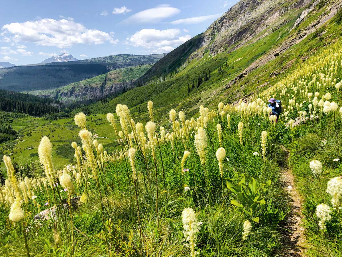 Wildflowers on North Circle Backpacking Trail in Glacier National Park