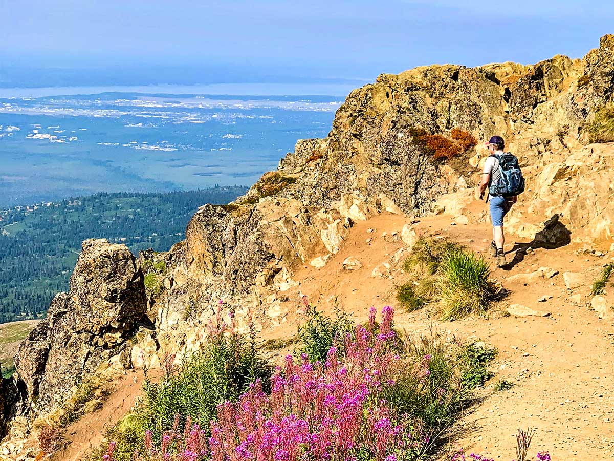 Hiker wildflowers and beautiful views from Flattop Mountain in Alaska