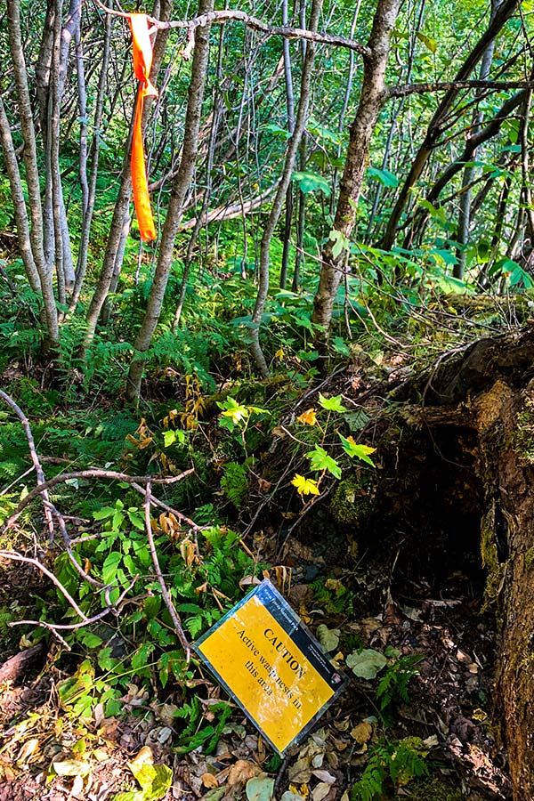 Sign warning about wasps on Exit Glacier trail near Harding Icefield
