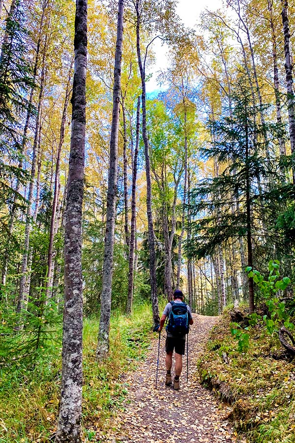 Wide path through the forest on a hike to Hope Point near Turnagain Arm Alaska