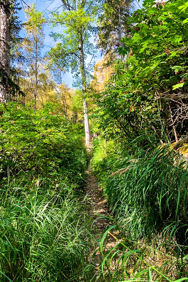 Overgrown path to Hope Point near Anchorage Alaska