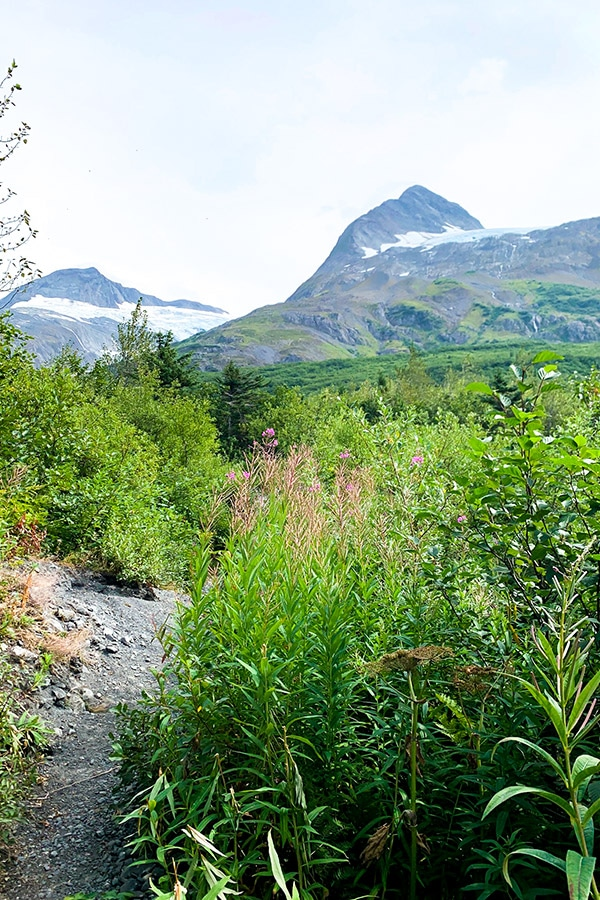 Wildflowers along the Portage Pass and Lake Trail in Alaska