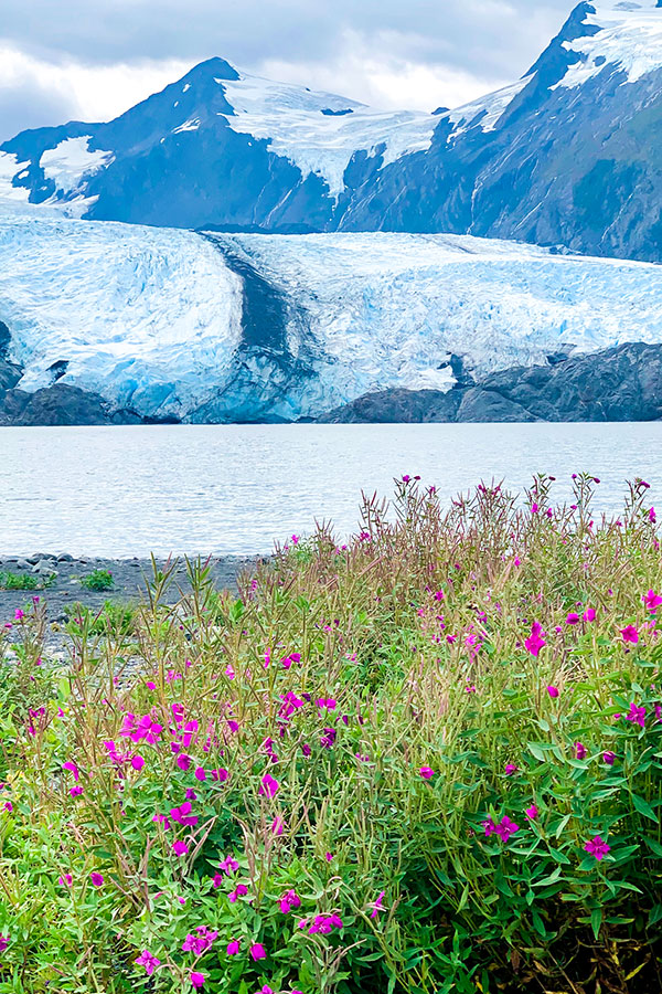 Wildflowers in front of Portage Glacier on Portage Lake Hike