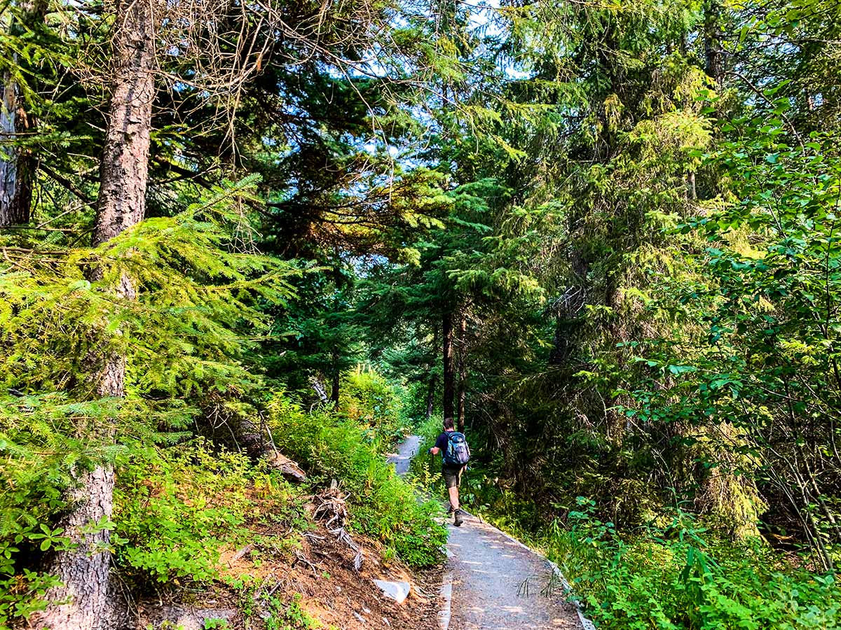 Hiker on a forest path of Ptarmigan Creek and Lake Trail Alaska
