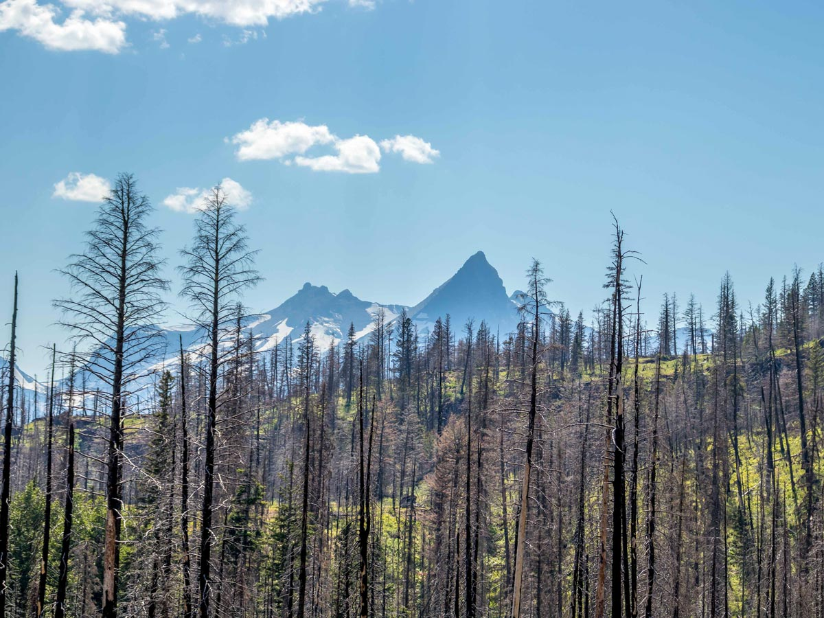 Trees still standing tall on Siyeh Pass following wildfire