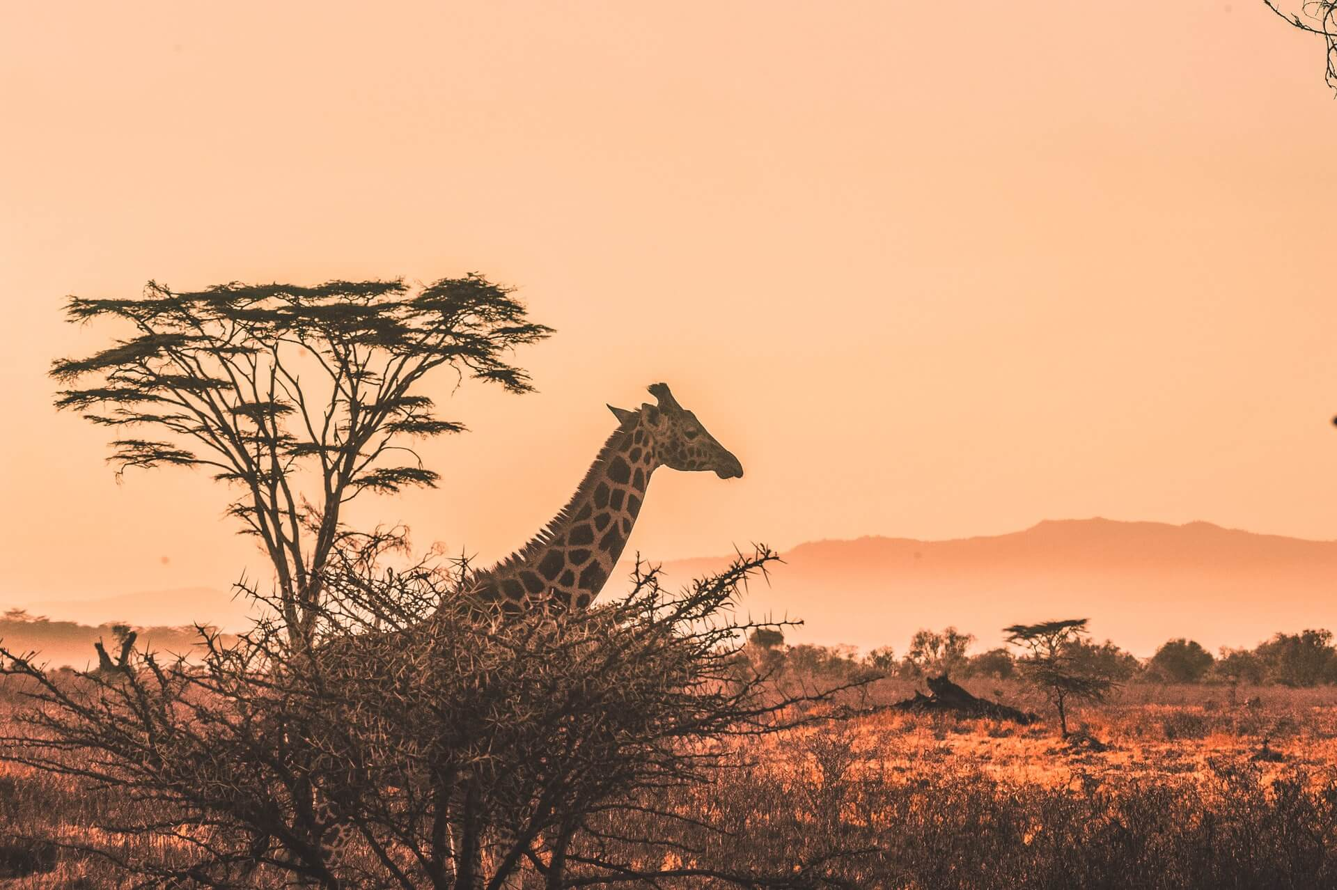 Best Family Holiday Destinations in Africa