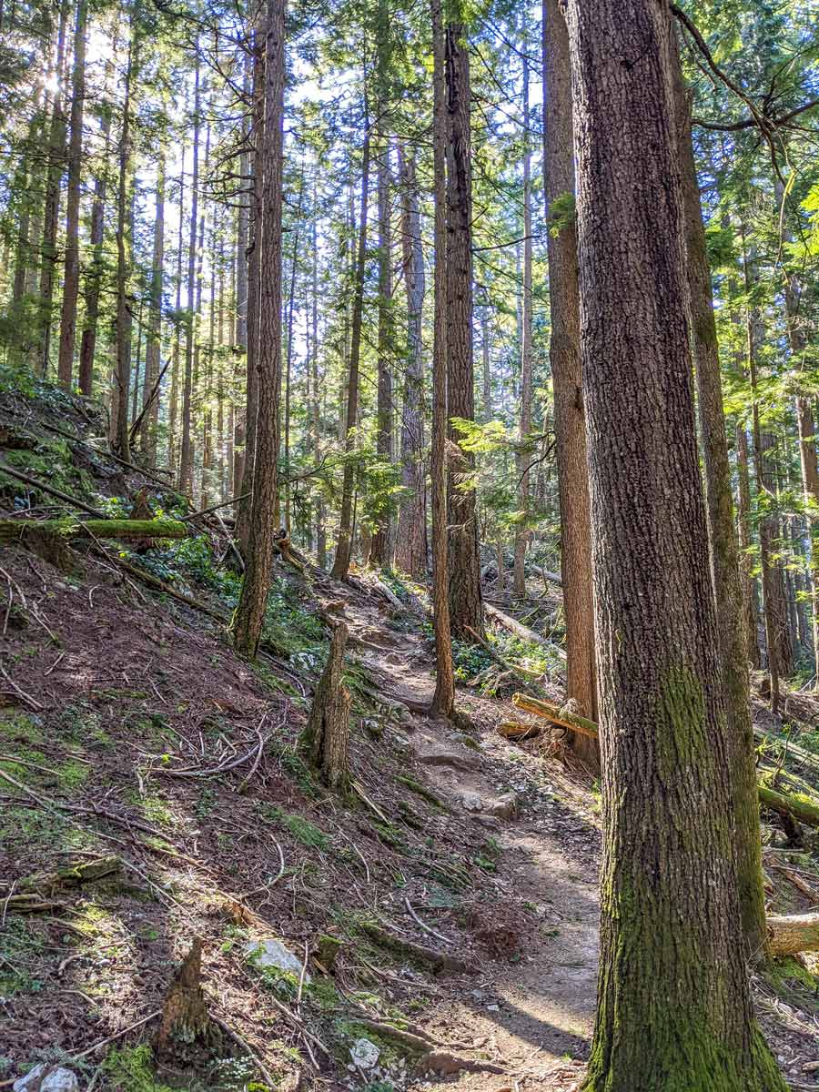 Beautiful sunny hiking trail to Diez Vistas near Vancouver in British Columbia