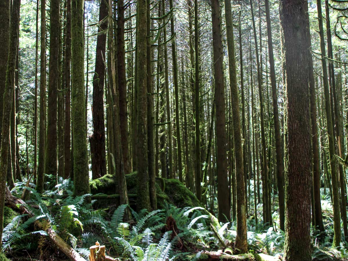 West coast forest near Gold Creek Falls around Vancouver
