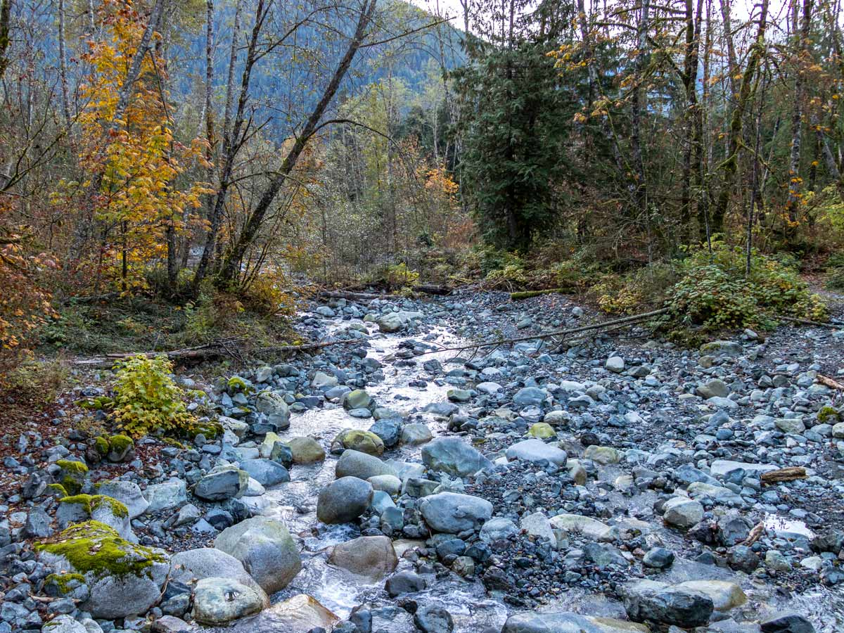 A creek along the West Canyon Trail in Golden Ears near Vancouver