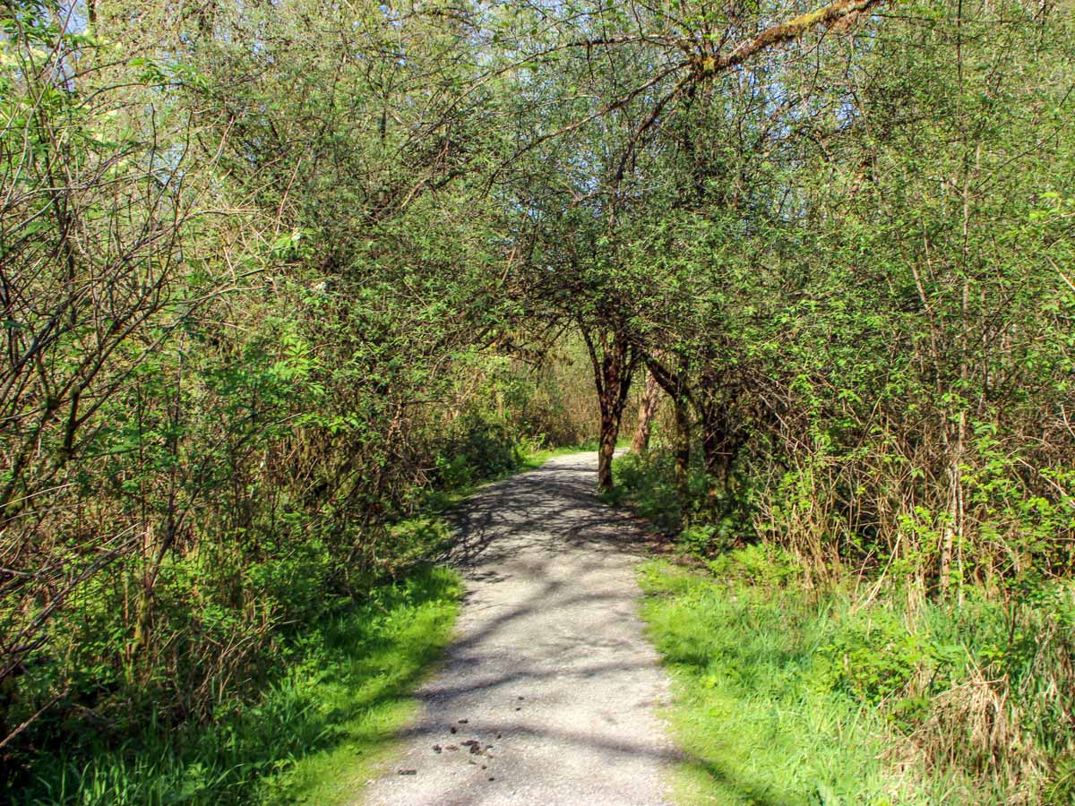 Sunny tree lined path up High Knoll trail near Vancouver BC